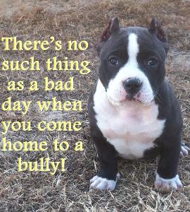 bully2.jpg