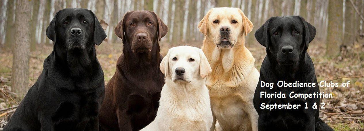 group dog 2.jpg